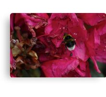 Bee with Pink Flower Canvas Print