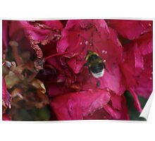 Bee with Pink Flower Poster
