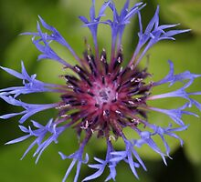 Unusual Blue and Pink Flower by Sojourner92