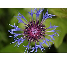 Unusual Blue and Pink Flower Photographic Print