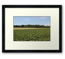The Last Sunflower Framed Print