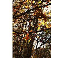 Autumn Fire Photographic Print