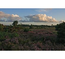 Holt Heath 8 Photographic Print