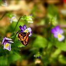 TEENY WEENY BUTTERFLY by myraj