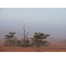 Holt Heath 9 Photographic Print