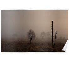 A soft morning on Holt Heath  Poster