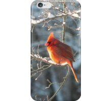 Cardinal Basking in Sunlight iPhone Case/Skin