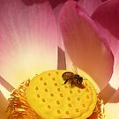 Lotus And Bee by Lance Leopold
