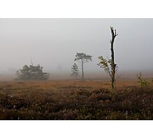 Holt Heath misty morning Photographic Print