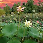 Sunrise Lotus Pond by lindabeth