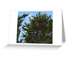 Wild Parrots of Telegraph Hill Greeting Card