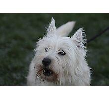Millie Dog Photographic Print