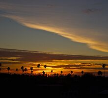 Palm Tree Sunset by Reuben Reynoso