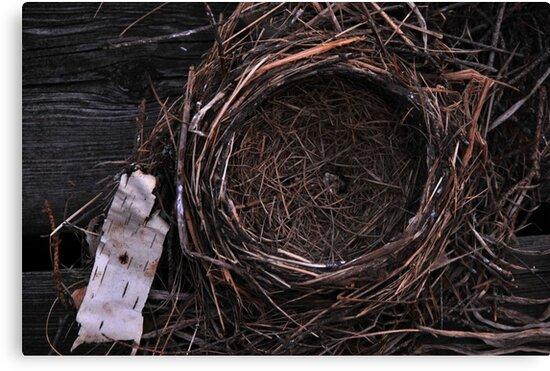 Empty Nest by Joanne  Bradley