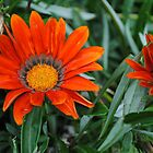 Bright Orange Flowers by Shaun  Gabrielli