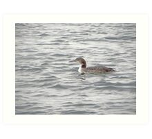 A Loon of Wisconsin Art Print