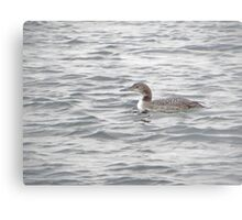 A Loon of Wisconsin Metal Print
