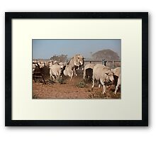 Sheep Olympics Framed Print