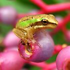 frog by Belinda Cottee