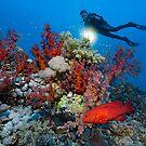 Reef Adventure by Norbert Probst