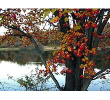 Grey tree with red and green leaves Photographic Print