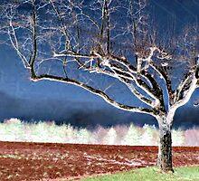 Magical Tree by Jane Neill-Hancock