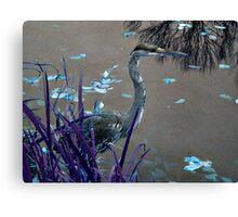 Blue Heron against Purple grass Canvas Print