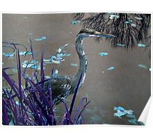Blue Heron against Purple grass Poster