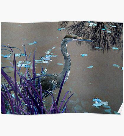 Blue Heron against Purple grass Poster