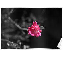 Flower. Poster