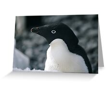 Adele Penguin Greeting Card