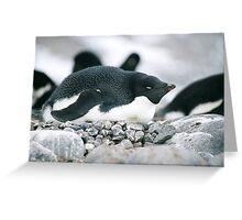 Nesting Adele Penguin Greeting Card