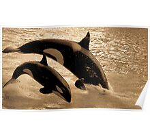 Breaching Orca Poster