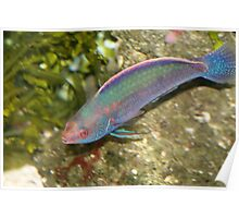 Colourful fish Poster