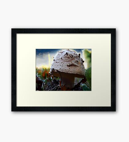 Mushroom Kingdom (1116) Framed Print
