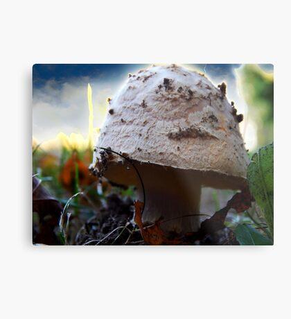 Mushroom Kingdom (1116) Metal Print