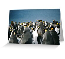 King Penguin majesty Greeting Card