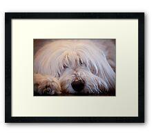 Loyal Pet Framed Print