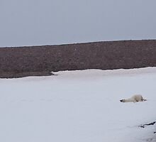 Overheating polar bear by michaelpartis