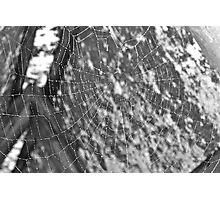spider web Photographic Print