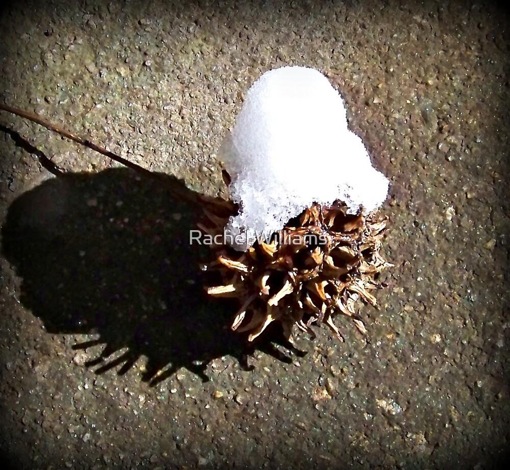 Snow Cap by Rachel Williams