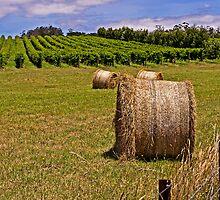 Hay Bales and Vines - Coombend Vineyard, Tasmania by TonyCrehan