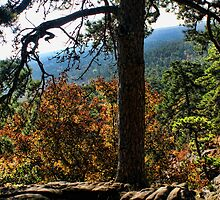 Robber's Cave Overlook by Carolyn  Fletcher