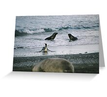 South Georgia Wildlife Greeting Card