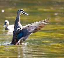 Stretching duck by michaelpartis