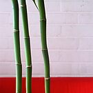 15/1 Lucky Bamboo by Evelyn Bach