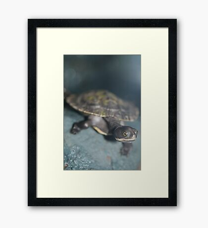Young Tortise Framed Print