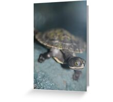 Young Tortise Greeting Card