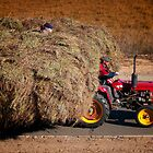 Hay Picker by Jason Pang, FAPS FADPA