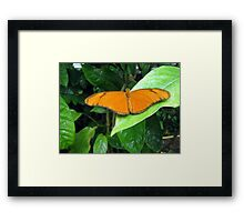 Butterfly on a leaf Framed Print